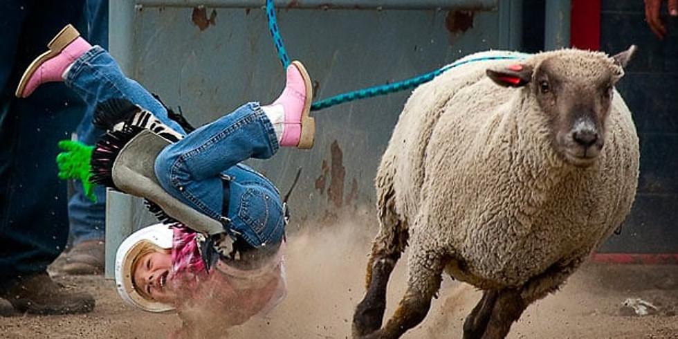 Mutton Bustin' & Calf Riding