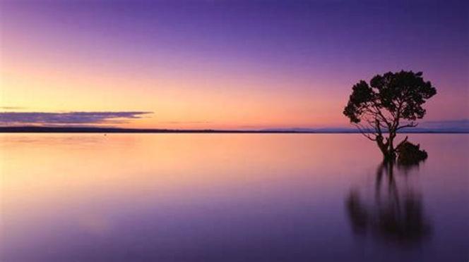 Lake tree.jpg