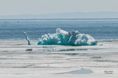 The Ice Elephant of Silver Islet