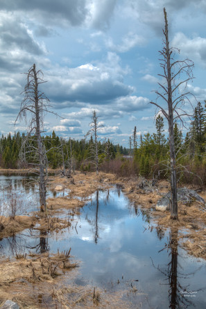 A Lovely Swamp