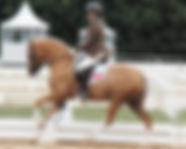 German Riding Ponies Australia