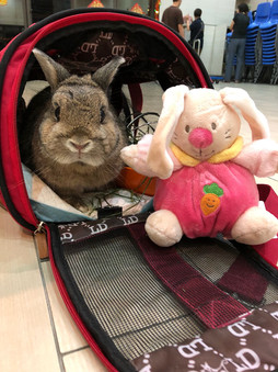 Ms Winnie and the Bunny