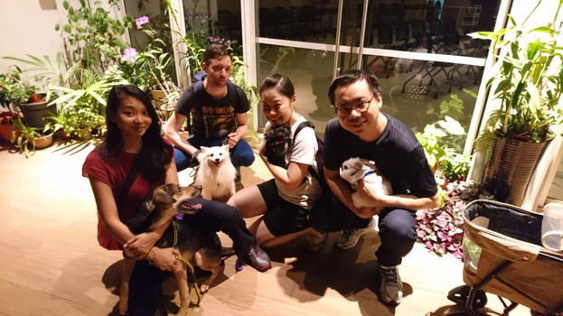 Doggies and Bunnies