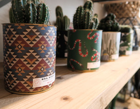 Cactus Lyon Ponderosa