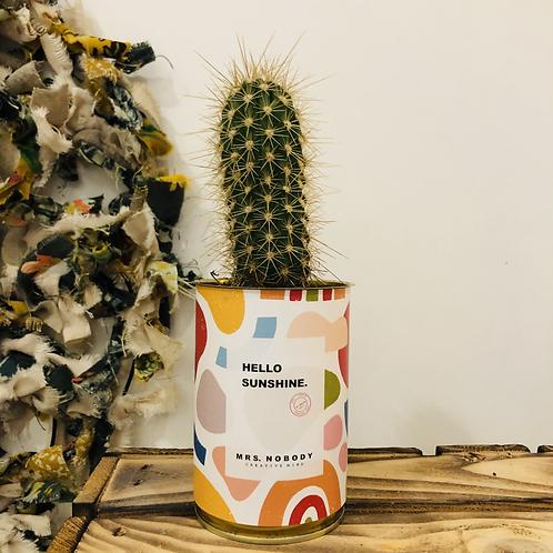 "Cactus ""HELLO SUNSHINE"""