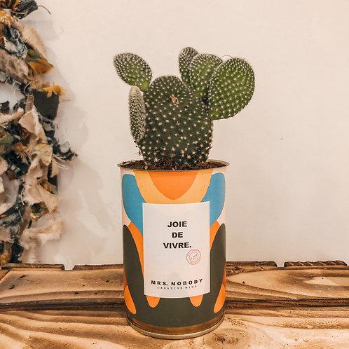"""Cactus """"JOIE DE VIVRE"""""""