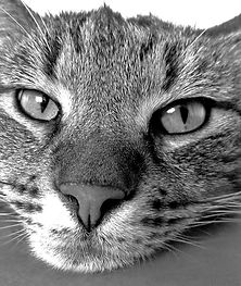 cat-98359_1920-mono.jpg