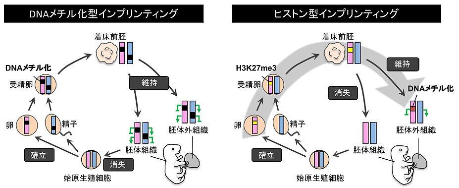 Fig4.Jpn.jpg