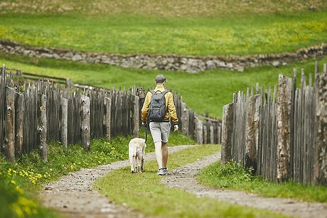 Wanderer mit Hund auf eingezäuntem Weg