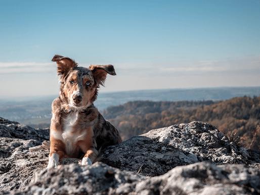 Teil 2: So findest du den richtigen Hundetrainer für dich!