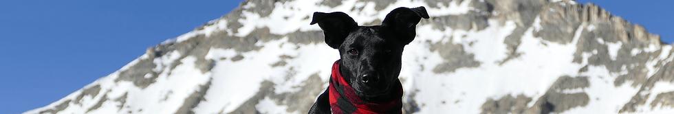 Schwarzer Hund vor verschneiten Bergen
