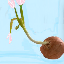 Onion Dreams #1