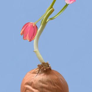 Onion Dreams