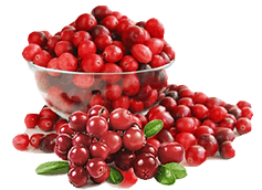 IMGBIN_cranberry-sauce-cup-chutney-squas