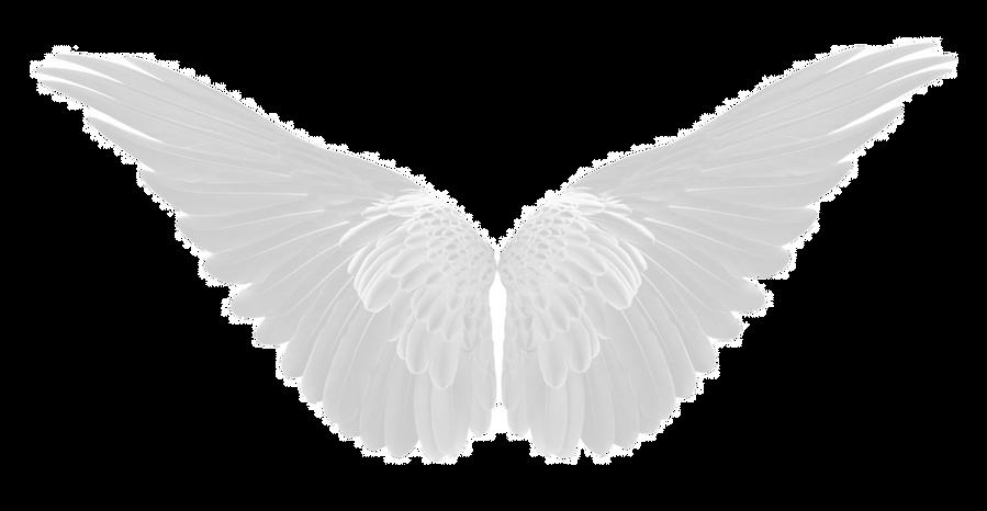 wings%202_edited.png