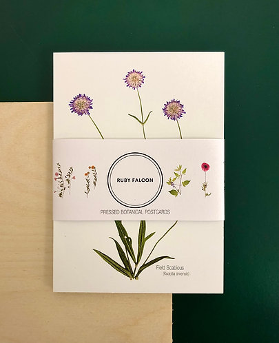 Pressed Botanical Postcard Set