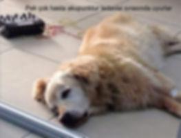 akupunktur sırasında genellikle köpekler uyur