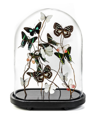 Azalia Oval Butterfly Dome