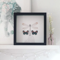 Framed Dragonfly and Butterflies