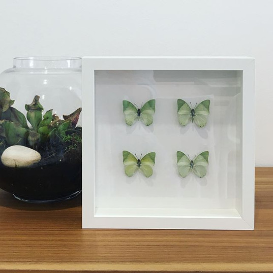 Working on some new butterfly frames for