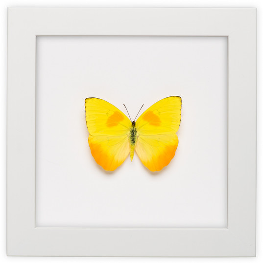 LisaBlack-butterfly-shoot-001.jpg
