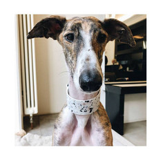 Galgo Kuna with Terazzo pattern wide collar