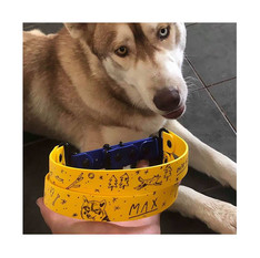Husky Max from Australia with personalized Duo Block biothane collar