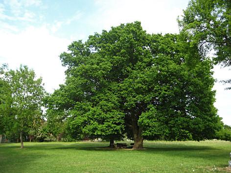Grünordnungsplan Spreewaldtor