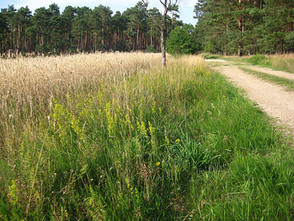 Grünordnungsplan Windpark