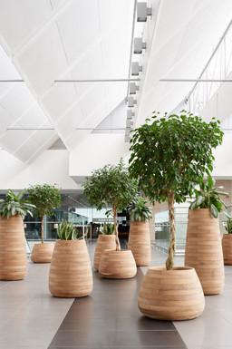Tuber Planters (1).jpg