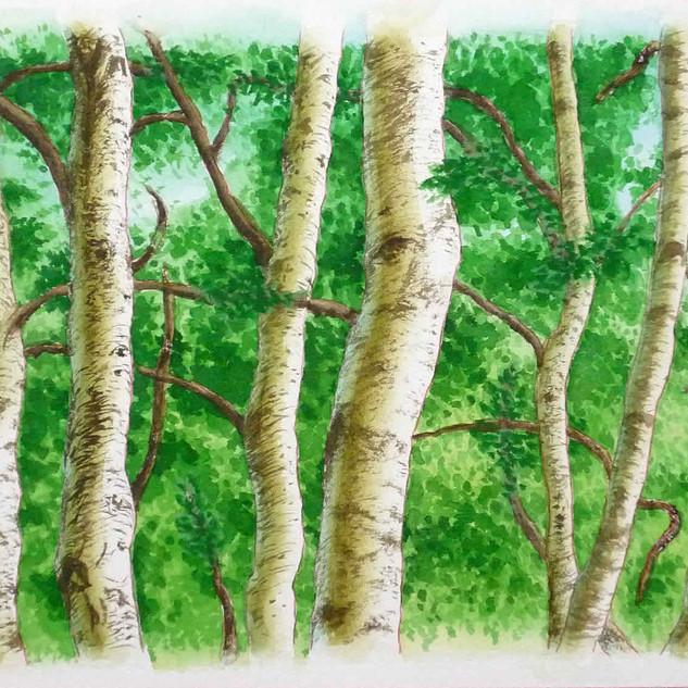 林の写実画習作