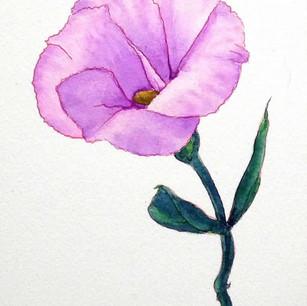 花の写実画習作