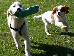 chiots cours collectifs balades