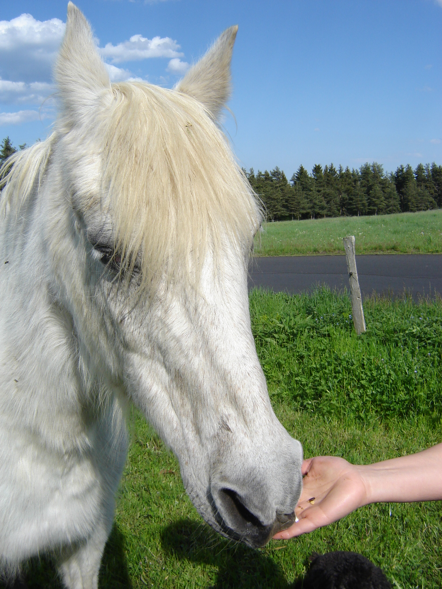 Fifi-Cheval de coeur