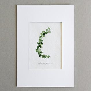 Botanical No.3