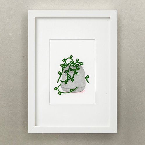 Plante Journal / Succulente