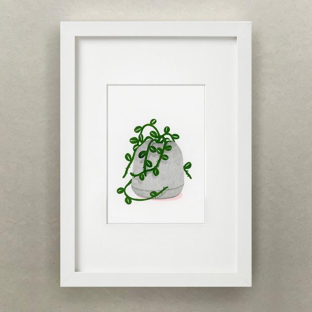 Plante Journal / Succulent