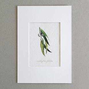 Botanical No.4