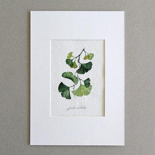 Botanical No.6
