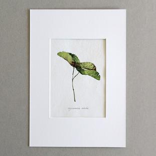 Botanical No.5