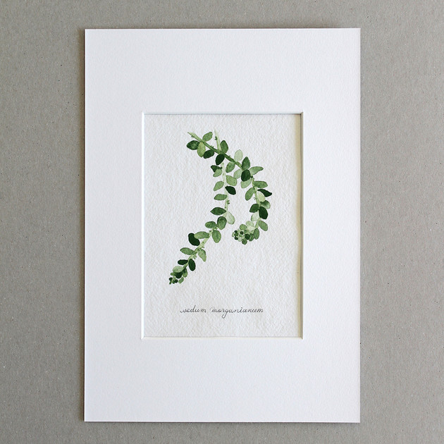 Botanical No.7