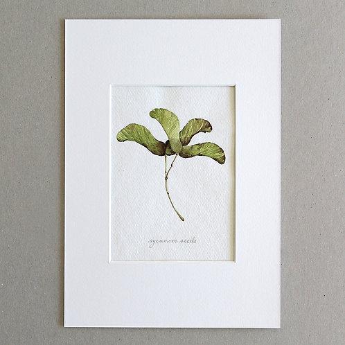 Botanical No.1