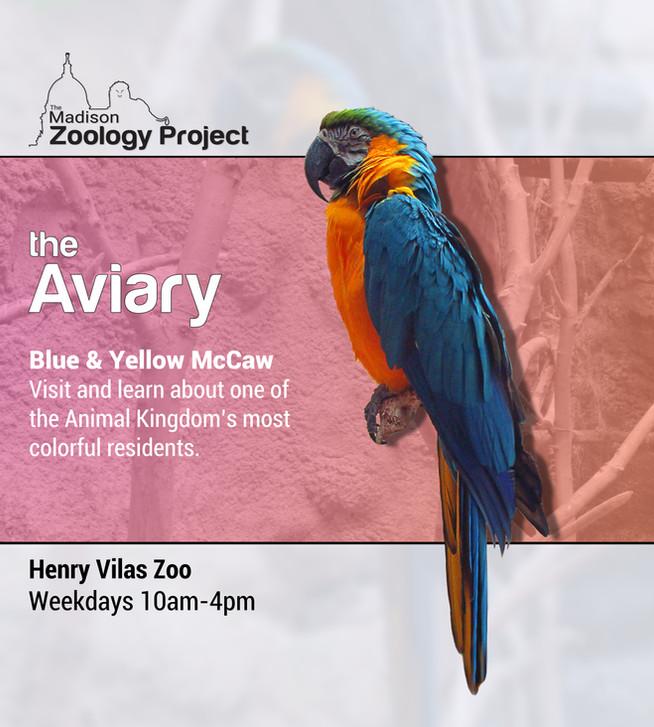 Bird poster.jpg