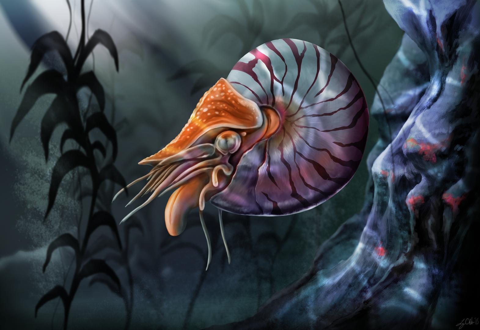 Nautilus Painting.png
