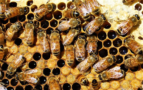 Bees for montage.jpg