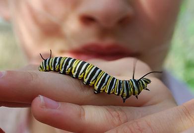 Caterpillar on hand.JPG