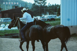 Steve Plutt taking horses back to Salty's from rodeo grounds