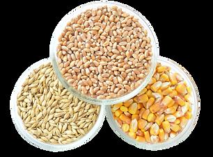 Corn-PNG-Image-2.png