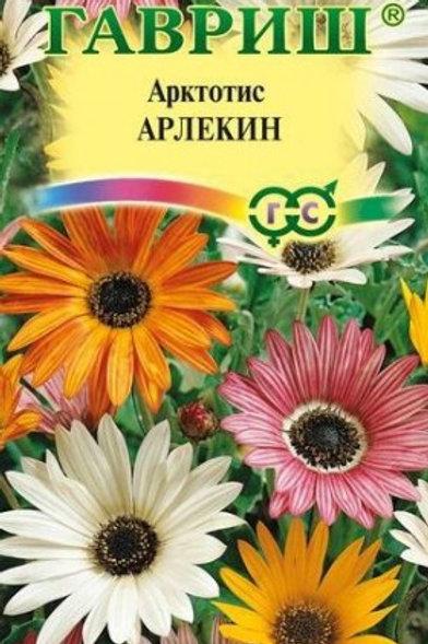 Цветы Арктотис Арлекин