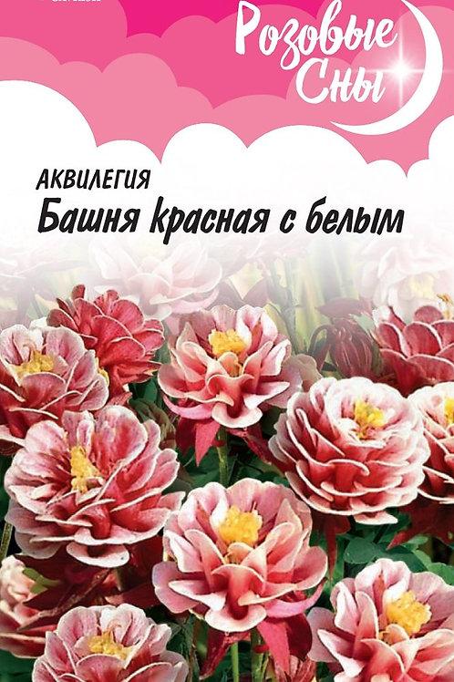 Цветы Аквилегия Башня красная с белым  Гавриш